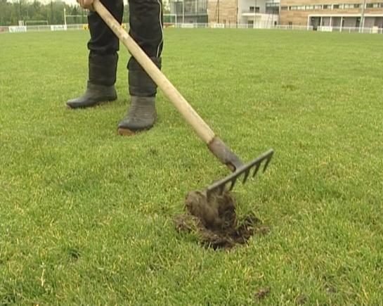 article reparation pelouse