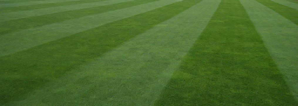 Pelouses de terrains de sports for Tarif de tonte de pelouse