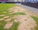 Août : halte à la dégradation des pelouses !